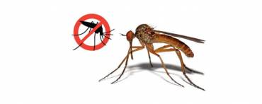 Tretiranje komaraca – obavijest