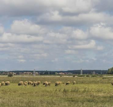 Javni natječaj za zakup poljoprivrednog zemljišta u vlasništvu RH na području Općine Stari Mikanovci s prilozima