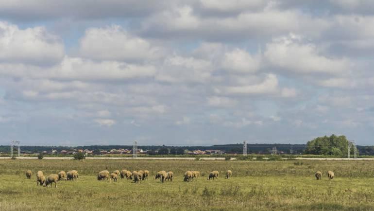 Javno otvaranja ponuda pristiglih na Javni natječaj za zakup poljoprivrednog zemljišta u vlasništvu RH