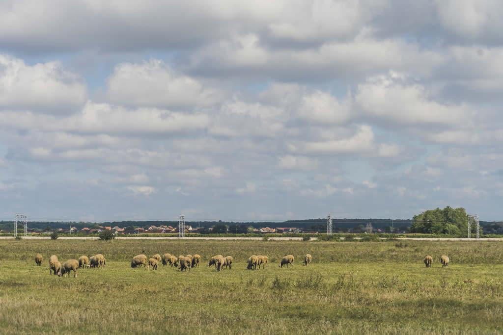 Obavijest o vremenu i mjestu provođenja javnog otvaranja ponuda za zakup poljoprivrednog zemljišta